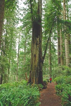 Ladybird Grove Redwoods 100309 137