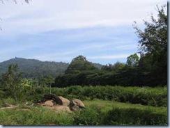 Yelagiri-Hills