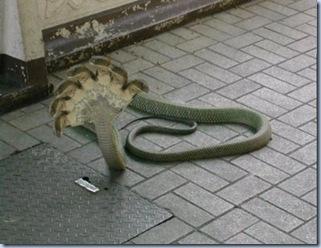 7 headed Snake