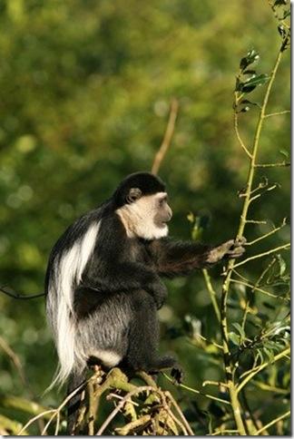 col.monkey