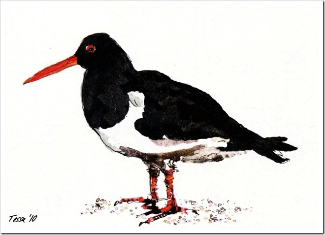 oystercatcher.June2010