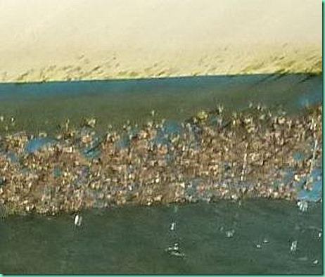 barnacles closer