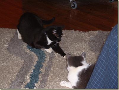 Einstein&Figaro