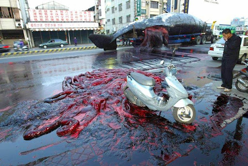 bloody whale in the street