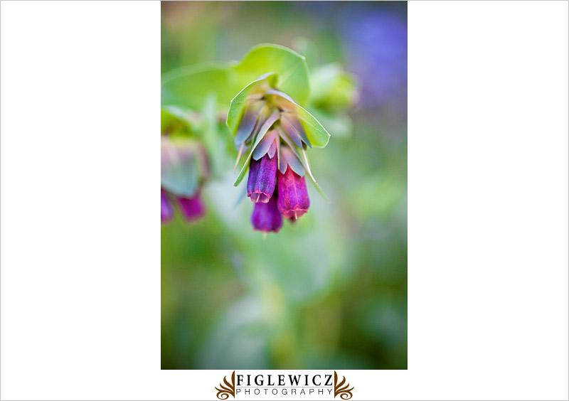 Botanic-Garden-Palos-Verde-Hayley-Bryan022.jpg