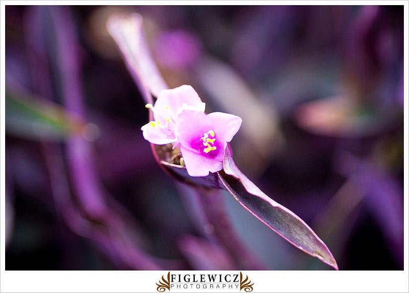 Botanic-Garden-Palos-Verde-Hayley-Bryan031.jpg