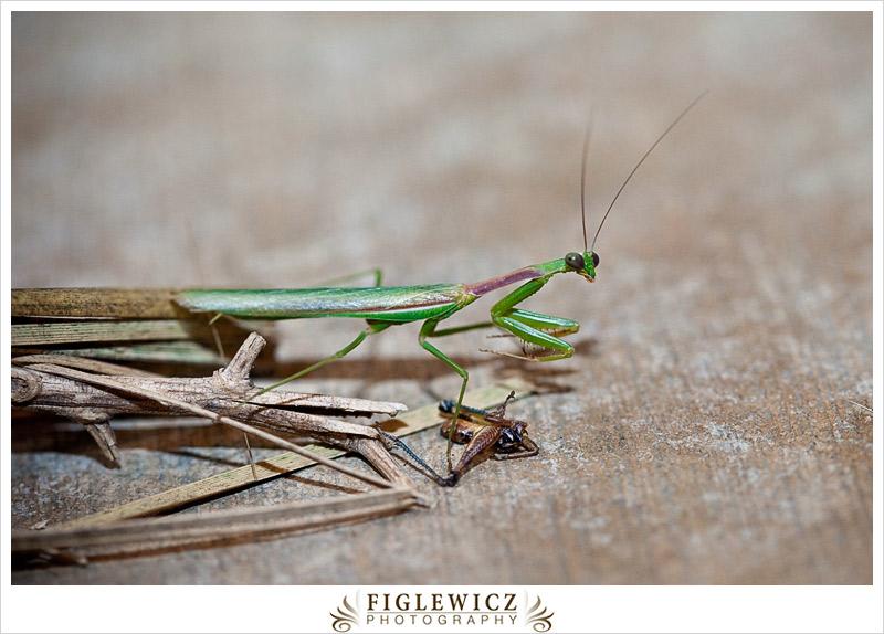 FiglewiczPhotography-AZ-0026.jpg
