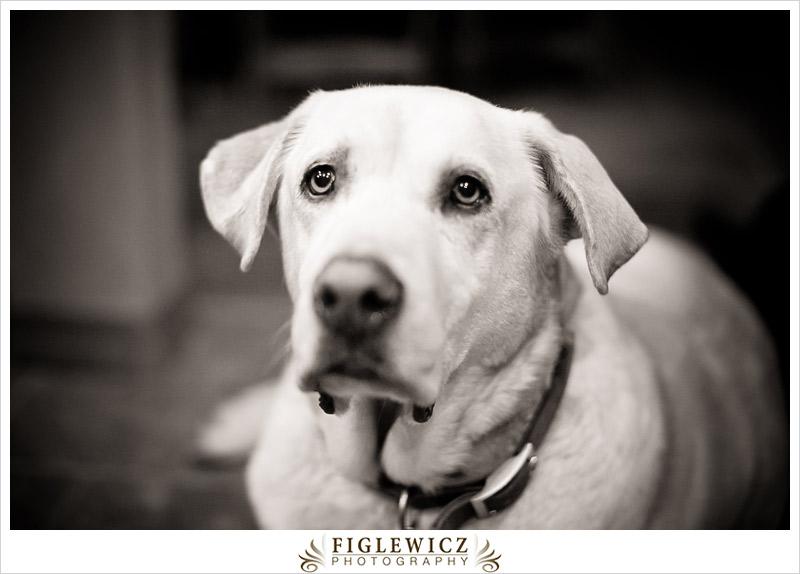 FiglewiczPhotography-Arizona-0064.jpg