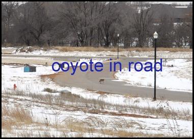 coyotex