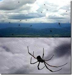 a97047_1-Spider