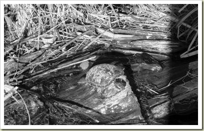 Friday-Turtle