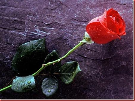 Valenties day greetings 1