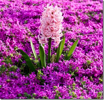 Amazing_Purple_Flowers_1