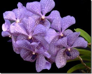 Amazing_Purple_Flowers_8