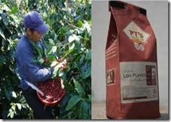 7. Los Planes Coffee, Citala, El Salvador