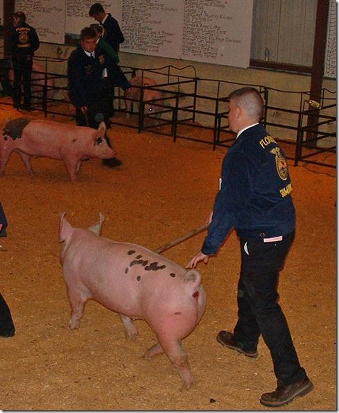 Fair Hog Show 061