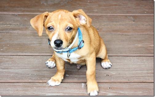 ebay puppy 037