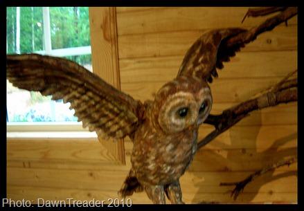 2010 07 158 Unos Owls