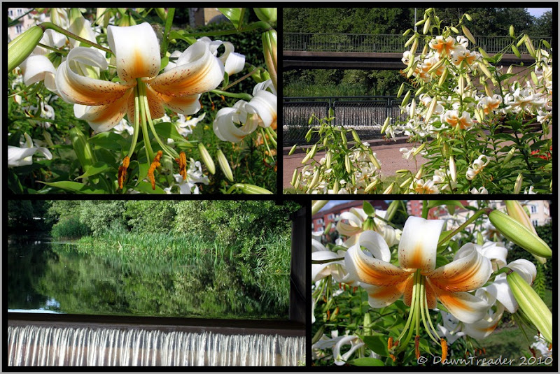 2010 07 28 Lilies and waterfall 2