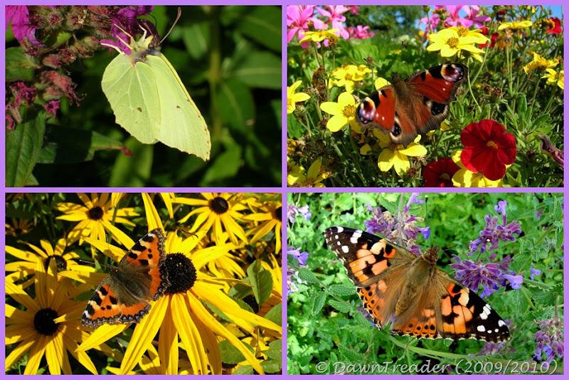 2009 fjärilar