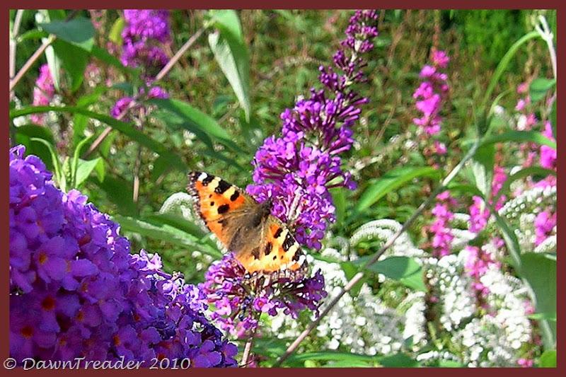 2010-08-20 butterfly4