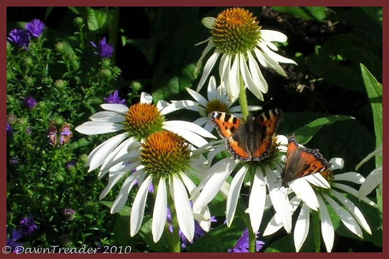 2010-08-20 butterfly5