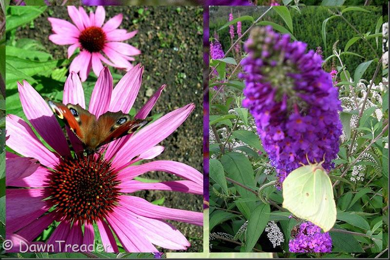 2010-08-20 butterfly11