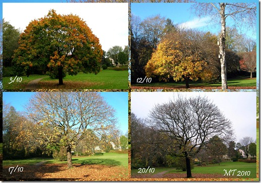 2010 autumn tree collage