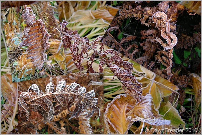 2010-10-13 frosty ferns-2