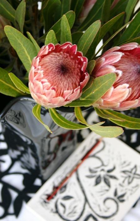 proteas & journal blog