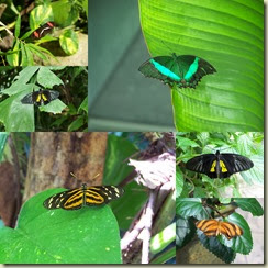 Butterfly Collage 2