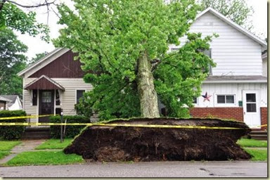Cheryl's House with Tree