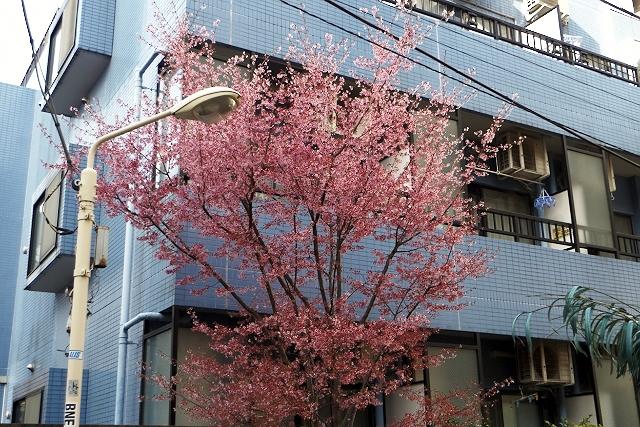 Shinjuku Mad - Lifelovers 12