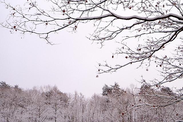 Shinjuku Mad - Paysage d'hiver 02