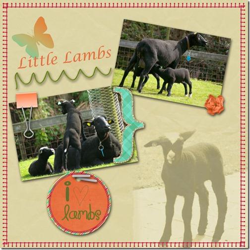 LittleLambs2