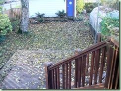 Leafy Yard