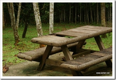 Broken-Picnic-Table