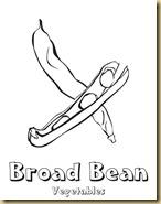 broad_bean (1)