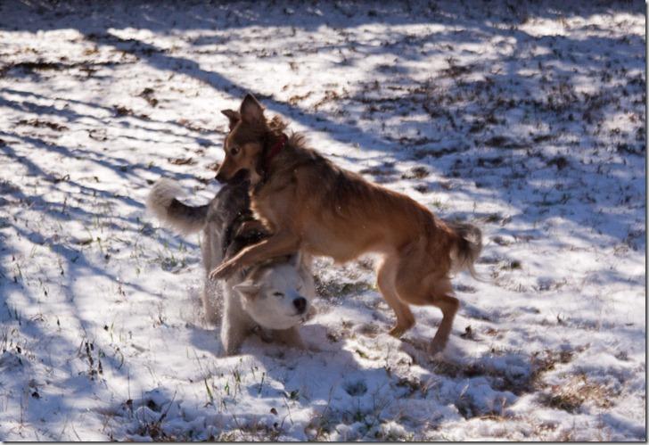 Snowdogs (1 of 3)