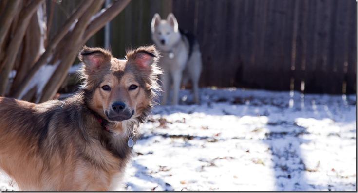 Snowdogs (3 of 3)