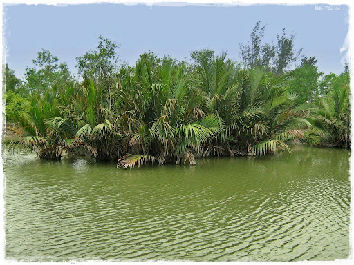 asia freeport, Sundarbans mangrove