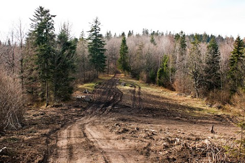... citlivé pôsobenie lesníkov ...