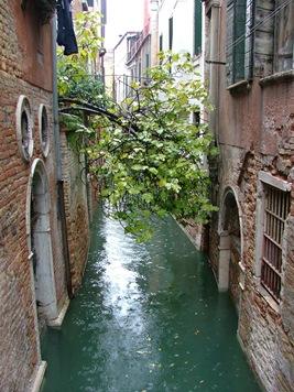 Acqua Alta a Venessia 020