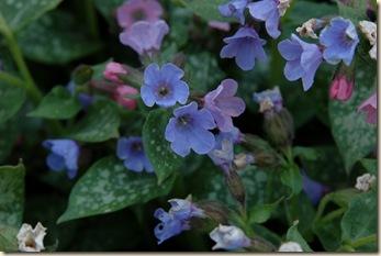 garden 065