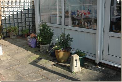 garden a day 008