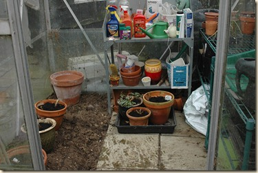 garden a day 003