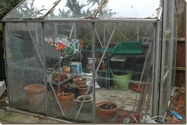 garden a day 004