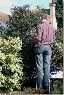 garden a day 029