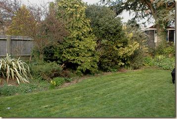 garden a day 104