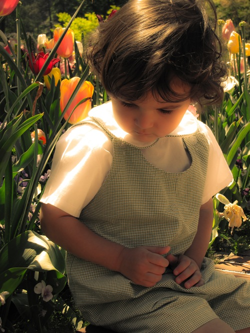 tulipsjackmidasglow (1 of 1)